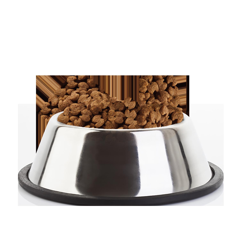 Eukanuba Adult Large Breed Chicken Kibble Bowl - Dog Food