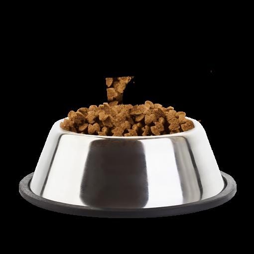 Eukanuba Adult Medium Breed Chicken Kibble Bowl - Dog Food