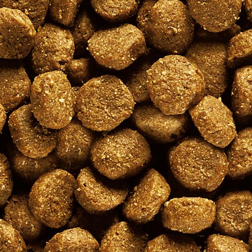 Eukanuba Puppy Medium Breed Chicken Kibble - Dog Food