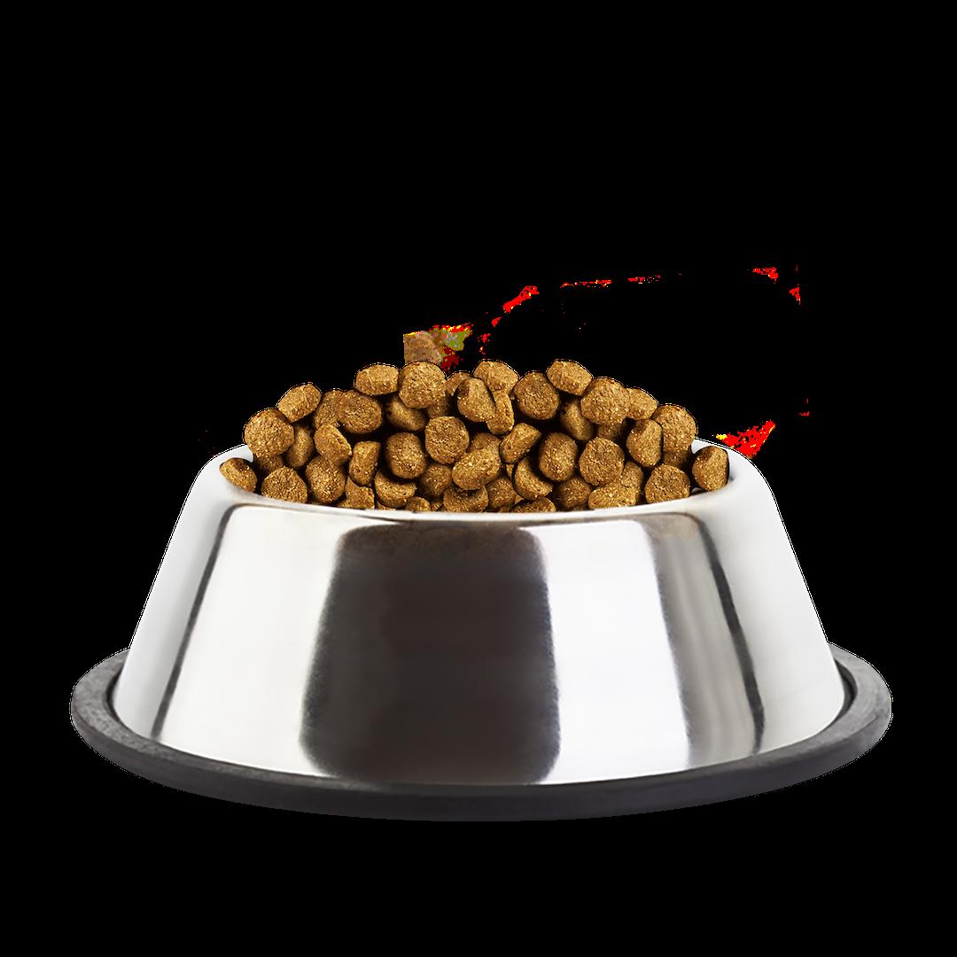 Eukanuba Puppy Medium Breed Chicken Kibble Bowl - Dog Food