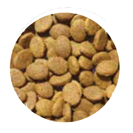 grain free adult dog food large breed salmon, trout sweet potato and asparagus kibble